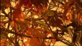 The Four Seasons - Autumn